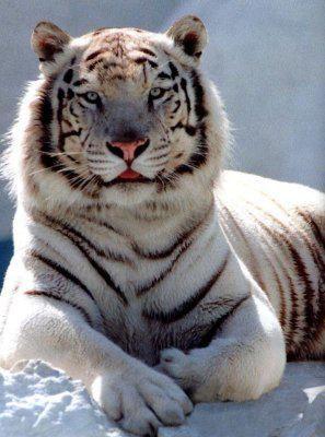 avatar de tigre-demon